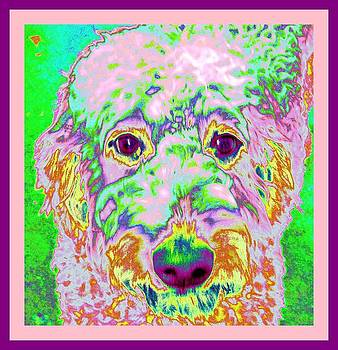 Labradoodle Dandy by Pam Utton