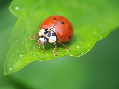 Ladybug by Stephen Janko