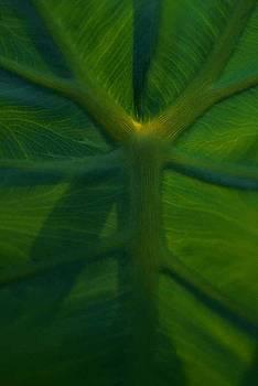 Leaf detail by Ed Bertorello
