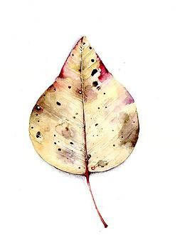 Leaf by Karen  Colenso