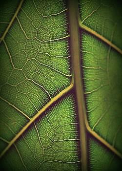 Leaf Pattern 1 by Amy Neal