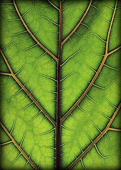 Leaf Pattern 2 by Amy Neal