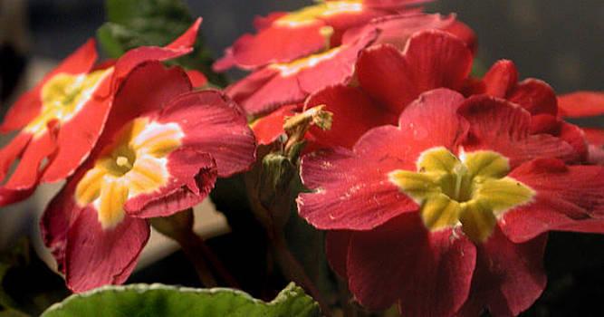 Little Flowers by Marilyn Marchant