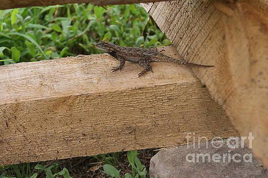 Little Lizard by Brittany Elliott