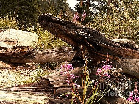 Logs and Flowers by Theresa Willingham