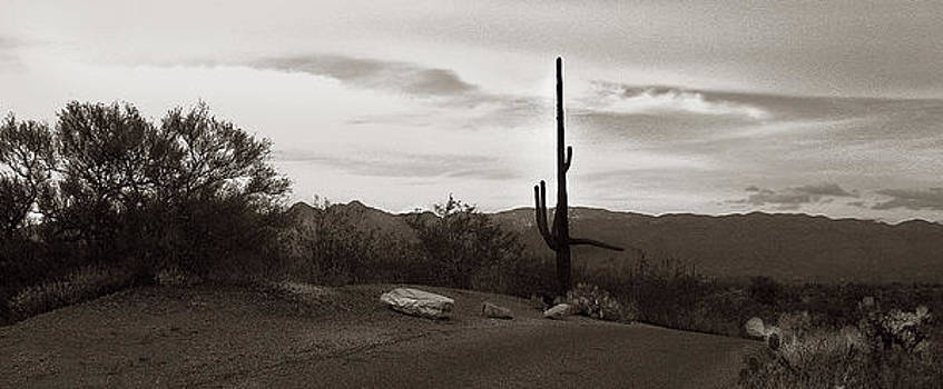 Lonely Cactus by Marilyn Marchant