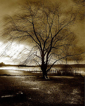 Lonely Willow by Marilyn Marchant