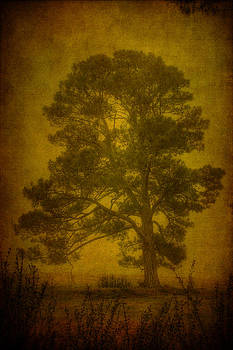 Lonesome Pine by James Corley