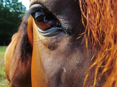 Look Into My Eye by Ginger Wemett
