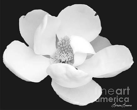 Magnolia 2 by Lorraine Louwerse