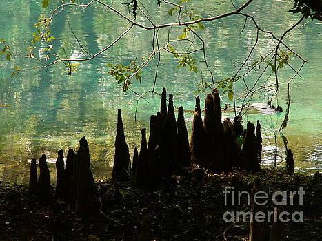 Manatee Springs Cypress Knees by Theresa Willingham