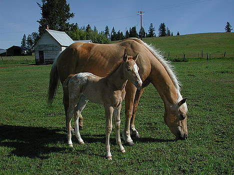 Mare and Foal by Edd  Voss