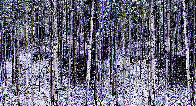 Memory of Trees by Walt Jackson