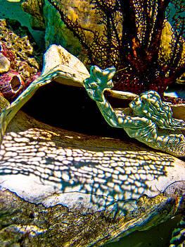Mermaid and her coral by Barbara Kelley
