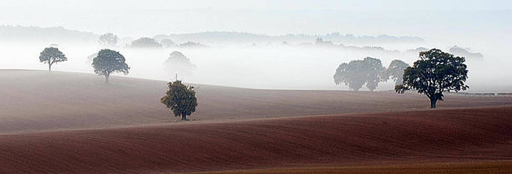 Mist by Bakhtiar Umataliev