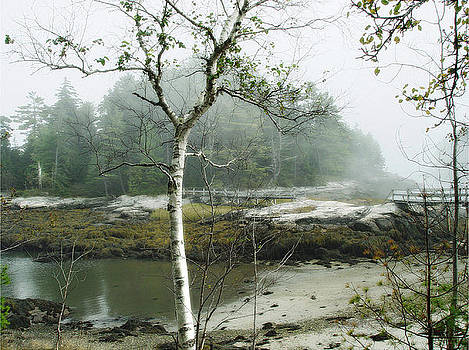 Misty Morning by Marilyn Marchant