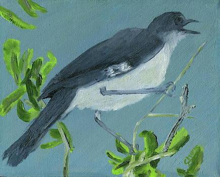 Mockingbird by Sylvia Riggs