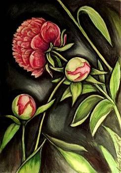 Moonlit Peonies by Linda Nielsen
