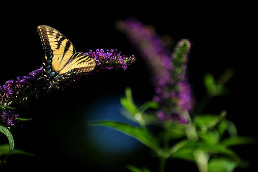 Morning Butterfly by Frank DiGiovanni