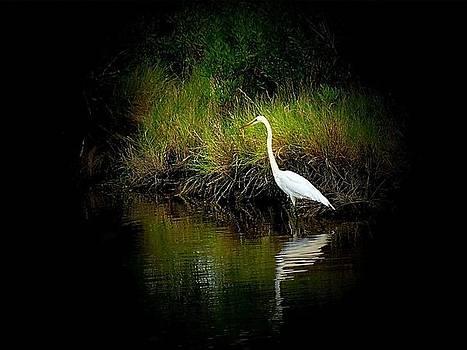 Morning Fishing by Rick Davis