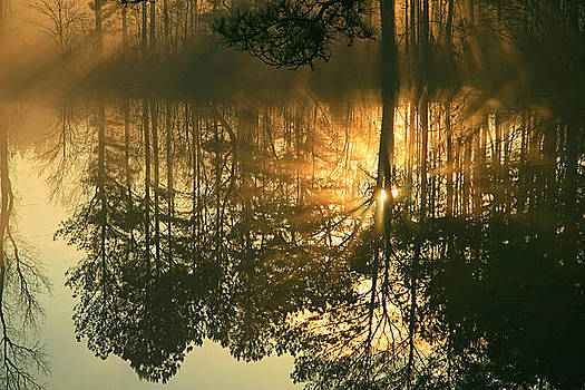 Morning Mist by James Corley
