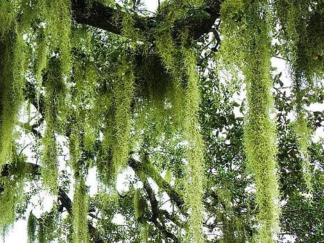 Moss by Anna Baker