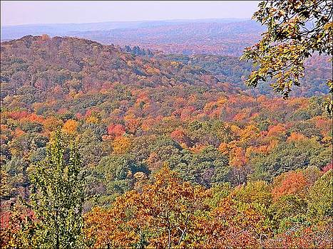 Mountains of Cameron County PA by Patricia Harrier
