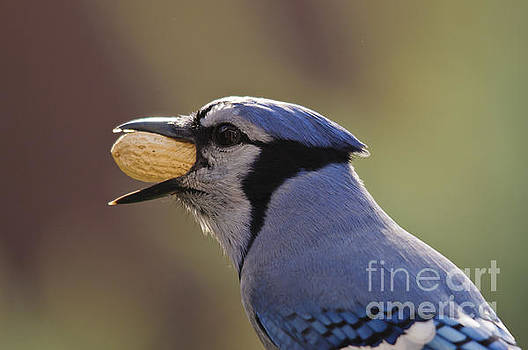 Mouthful or Beakful.... by Christine Kapler