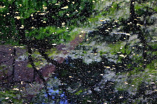 Natures Abstract by Deborah  Crew-Johnson