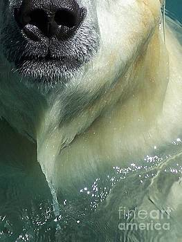 Nose of a Polar Bear by Stephanie Peters