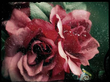 Not so flawless Rose  by Denisse Del Mar Guevara