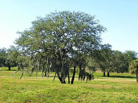 Oak Tree  by Anna Baker