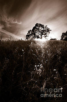 Oak Tree Silhouette by Matt Tilghman