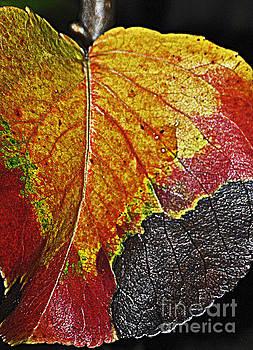 October Color by Juls Adams