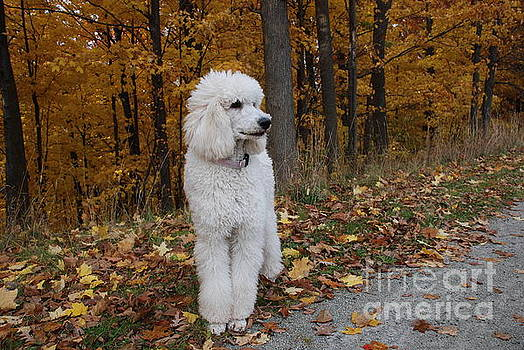 Brandy In Autumn by Lisa  DiFruscio
