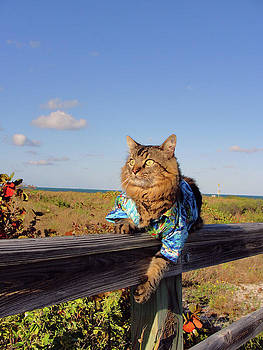 On the Fence by Joann Biondi