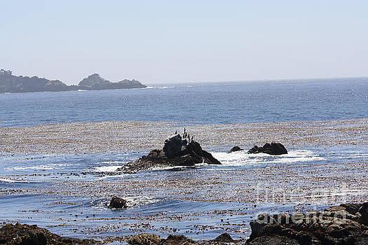 On the rocks by Lea Cypert