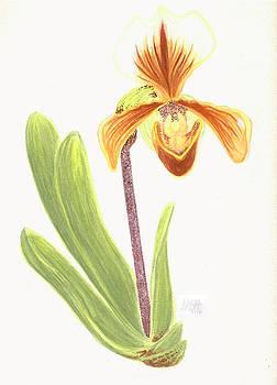 Orchid by Amanda Adams
