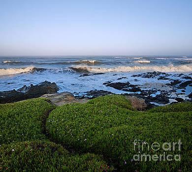 Pacific Sunrise by Matt Tilghman