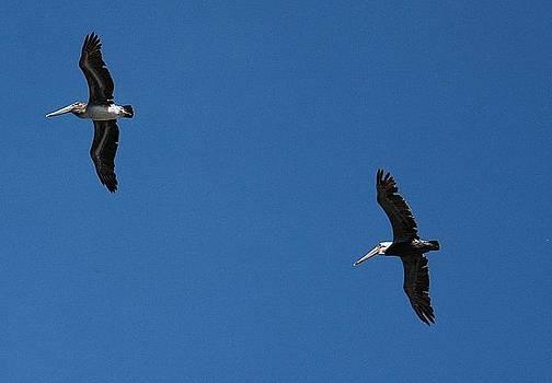Pair of Pelicans by Wanda Jesfield