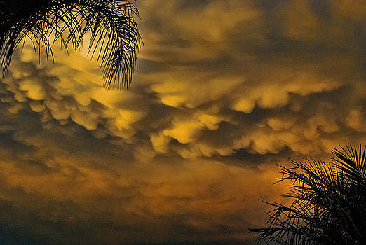 Palm And Clouds by Joetta West