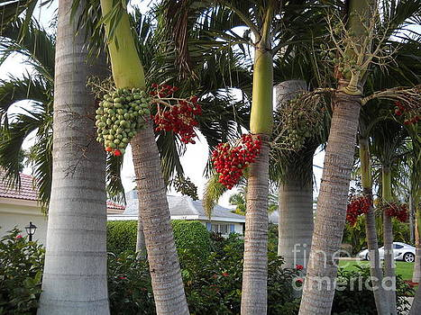Palm Trees by Terri Maddin-Miller