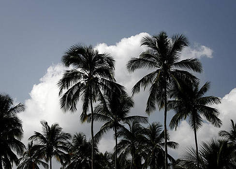 Palms and Clouds by Shane Rees