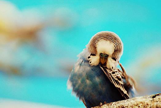 Parakeet by Jennifer Kelly