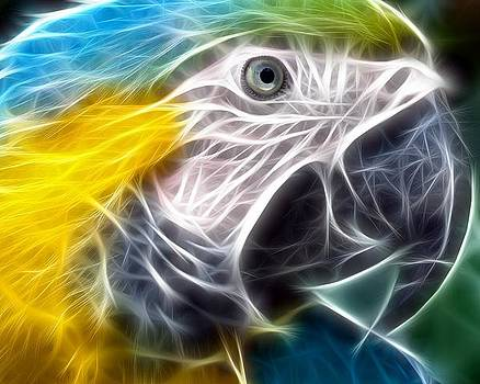 Parrot by Bob Smith
