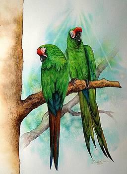 Parrots by Arlene Davidson