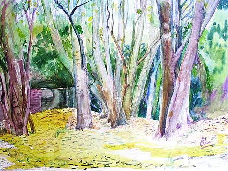 Peaceful Autumn by Prabhu  Dhok