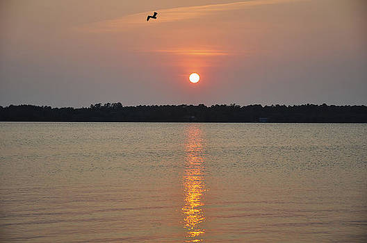 Pelican Sunset by Donnie Smith