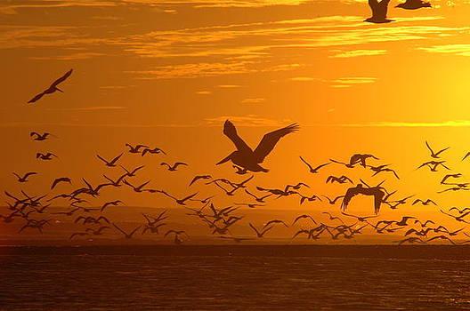 Pelican Sunset by Wanda Jesfield