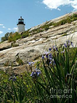 Pemaquid Lighthouse and Wildflowers by Theresa Willingham
